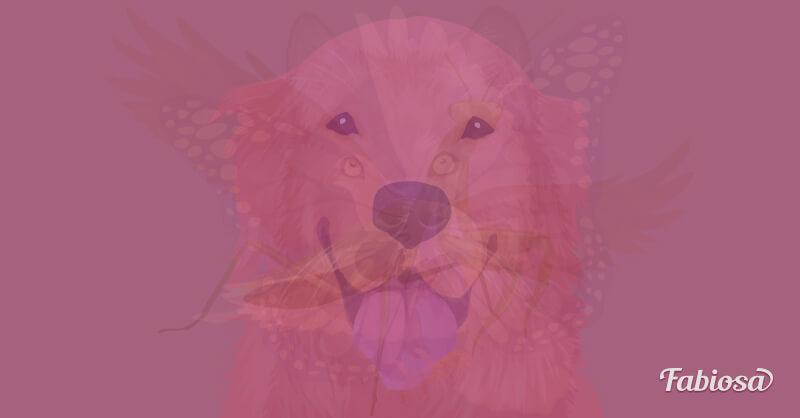 test de los animales perro