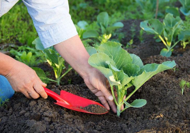 tips de jardinería compost