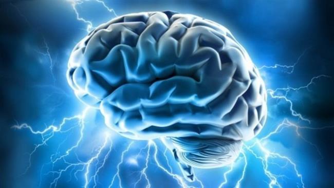 el cerebro de una persona