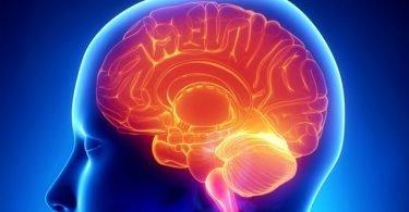 los efectos negativos que ocasiona el azúcar en nuestro cerebro