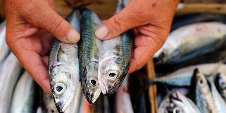 mercurio presente en los pescados