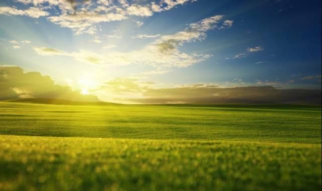 paisaje con colores verdes