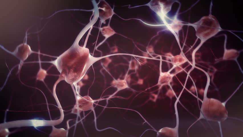 Neuronas activas
