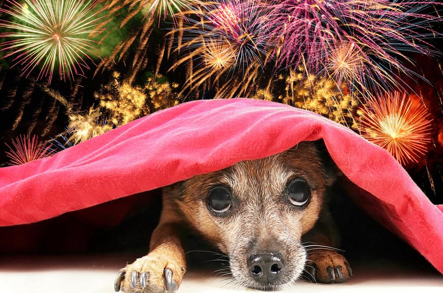 los perros y la pirotecnia