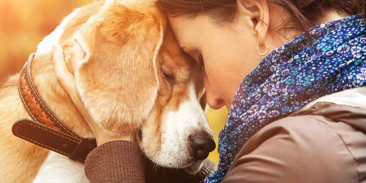 mascotas ayudan a personas