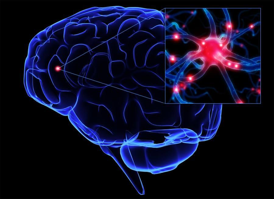 células cerebrales neuronas