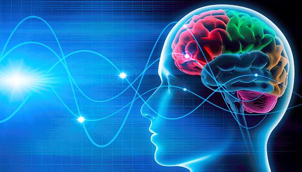 la actividad cerebral durante el descanso