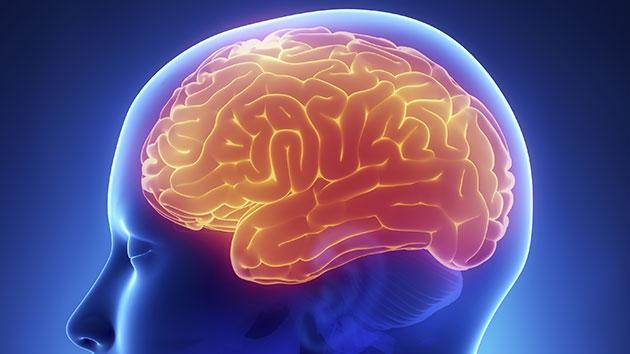 el cerebro se reduce