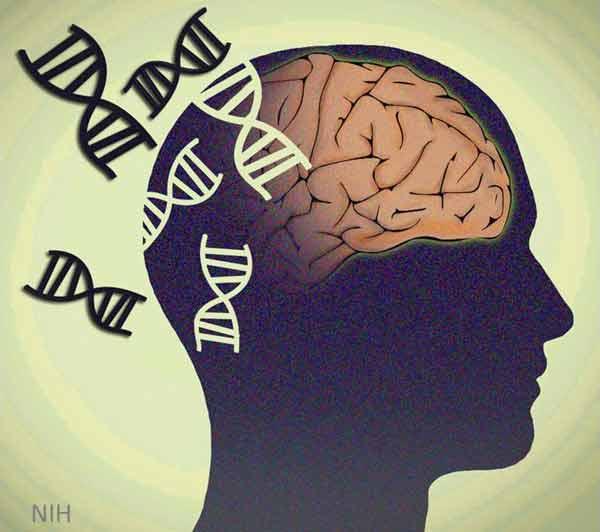 el gen del alzheimer