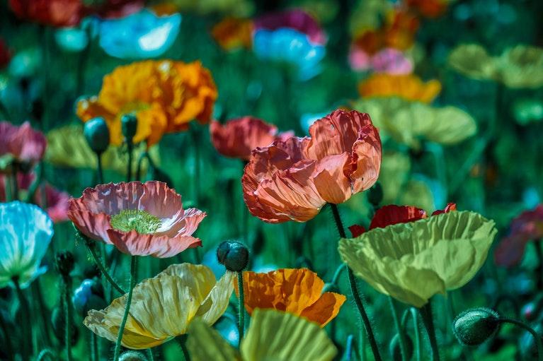 plantas con poderes curativos