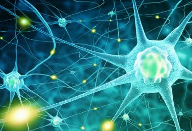 como es el funcionamiento de las neuronas