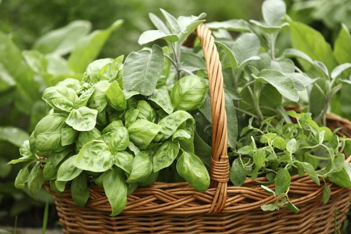 hierbas que ayudarán a una persona a equilibrar las hormonas