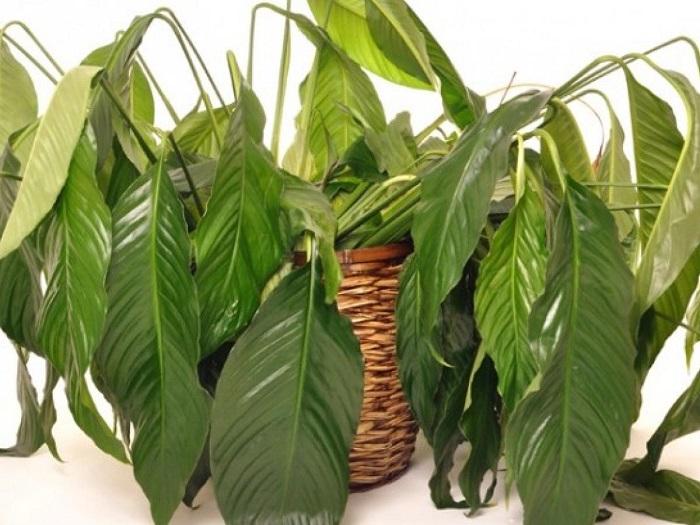 plantas de interior sin agua