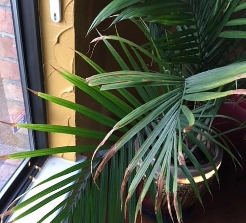 plantas de interior sin humedad