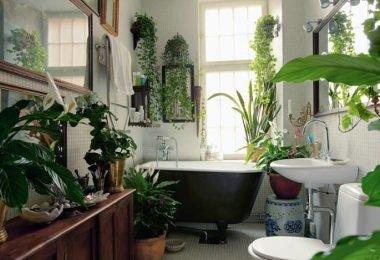plantas de interior que van muy bien con el baño