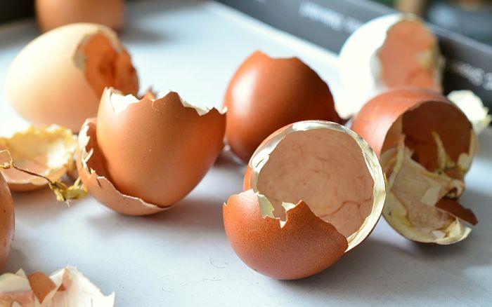 cáscaras de huevo en el jardín
