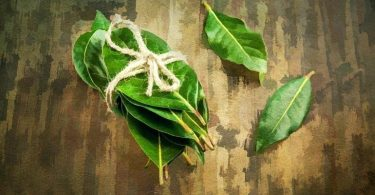 Beneficios para la salud de las hojas de laurel