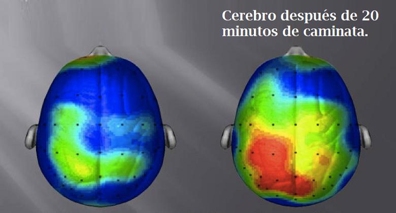 caminar ayuda en la niebla cerebral