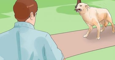 los perros pueden detectar las malas vibras