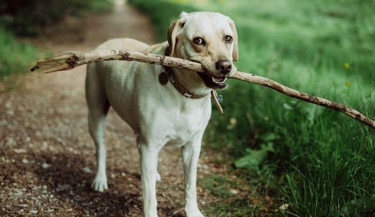 los perros entienden más