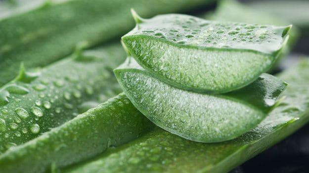 el gel producido por la sábila ayuda a cuidar tu salud bucal