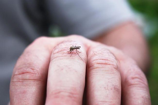 persona que ha sido picada por un mosquito que trasmite el dengue