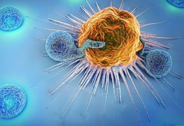 el sistema inmunológico afectado por el estrés