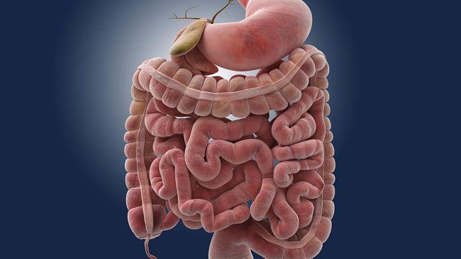 Las alteraciones en el intestino y sus manifestaciones en el cuerpo