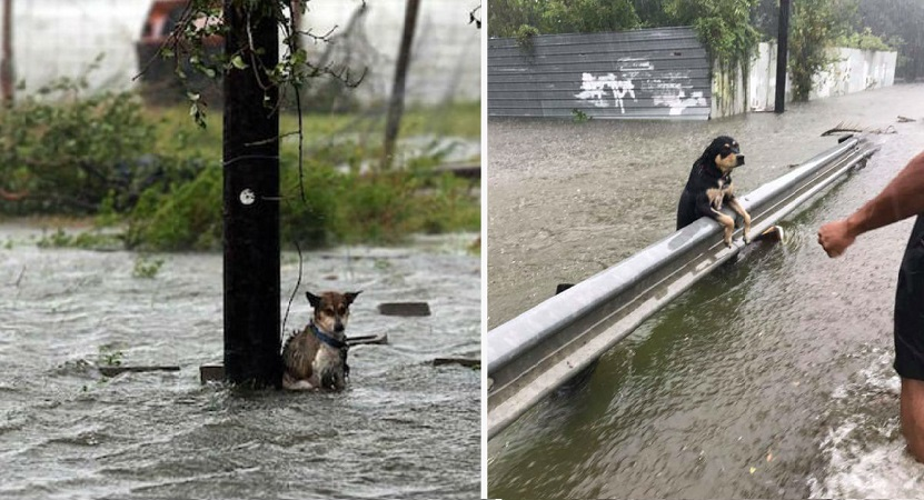 desastres naturales que afectan a animales