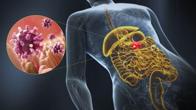 Qué es la gastroenteritis bacteriana y cómo se reproduce