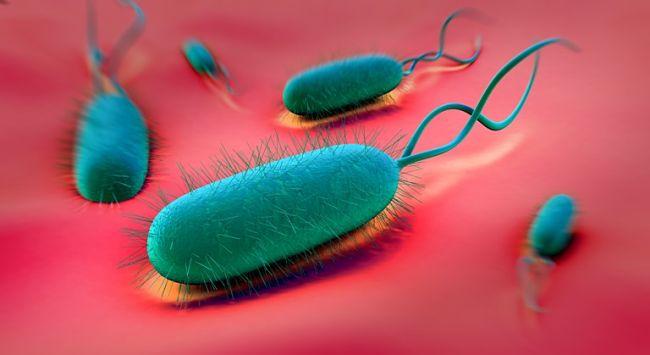 Gráfico gastroenteritis bacteriana