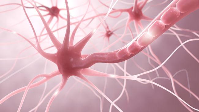 Epilepsia a nivel cerebral