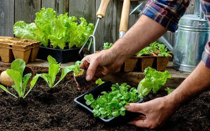 hogar más ecológico produciendo un jardín