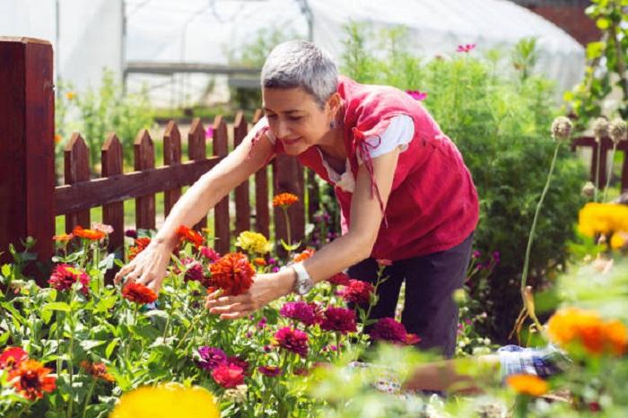 jardínes hermosos de corte