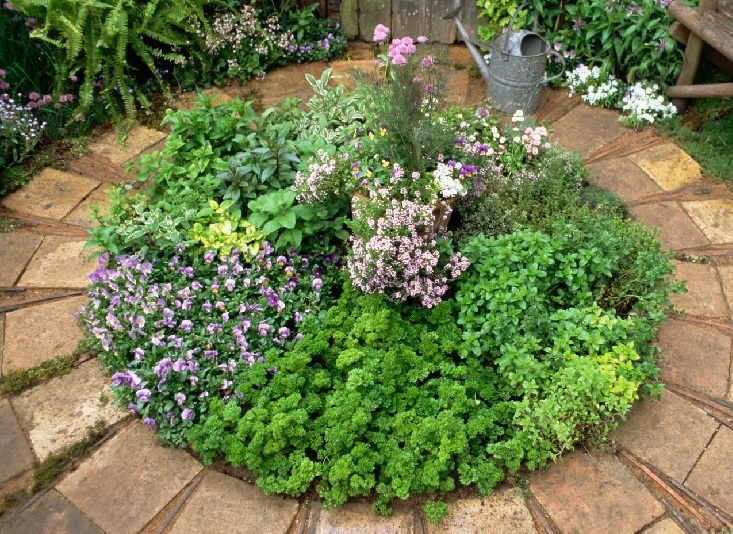 jardínes hermosos de hierbas