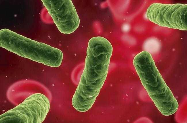 Cómo puedes prevenir la salmonella