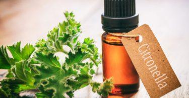 Usos y beneficios del aceite de citronela