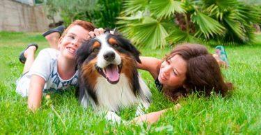Cómo elegir al perro adecuado para ti