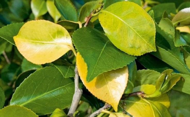 deficiencia de nitrógeno en las plantas