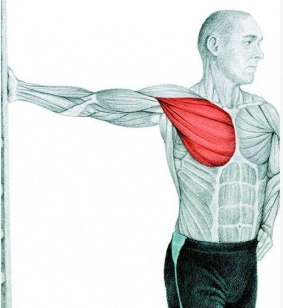 estiramientos de puerta ejercicios tratar el dolor de espalda