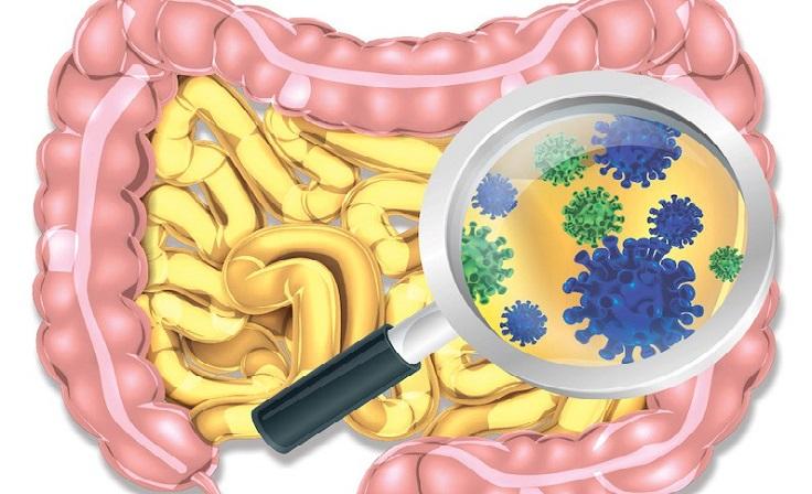la fibra y el microbioma intestinal
