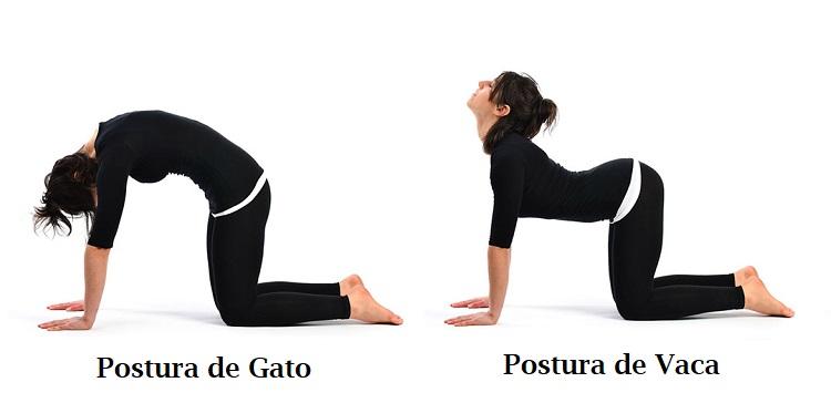 postura de gato y vaca ejercicios para mejorar la postura