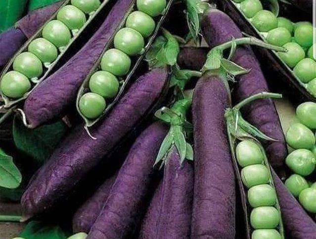frutas y verduras guisantes morados
