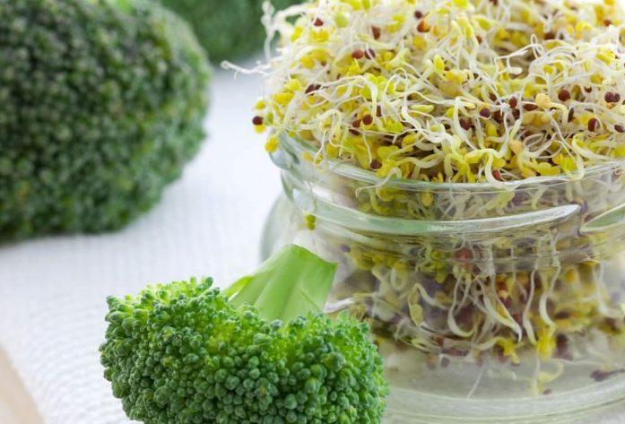 germinado de brócoli