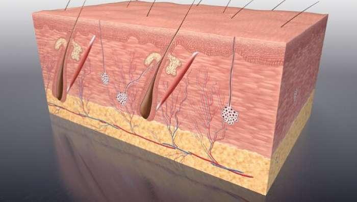 Ilustración de la dermatitis seborreica y los foliculos