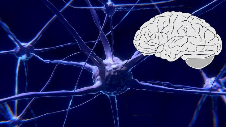 crecer nuevas neuronas