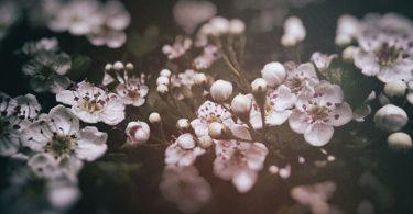 Cómo plantar el espino blanco