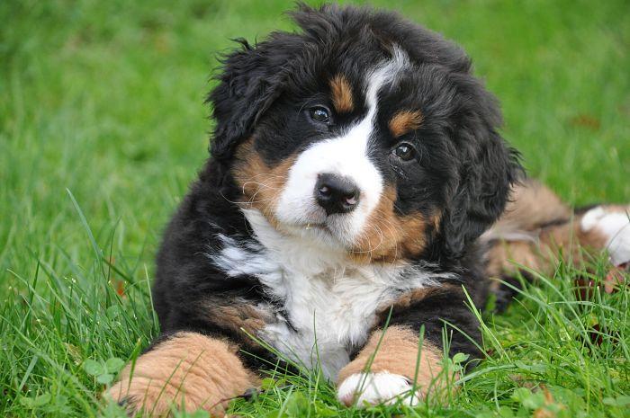 Plantas tóxicas para los perros