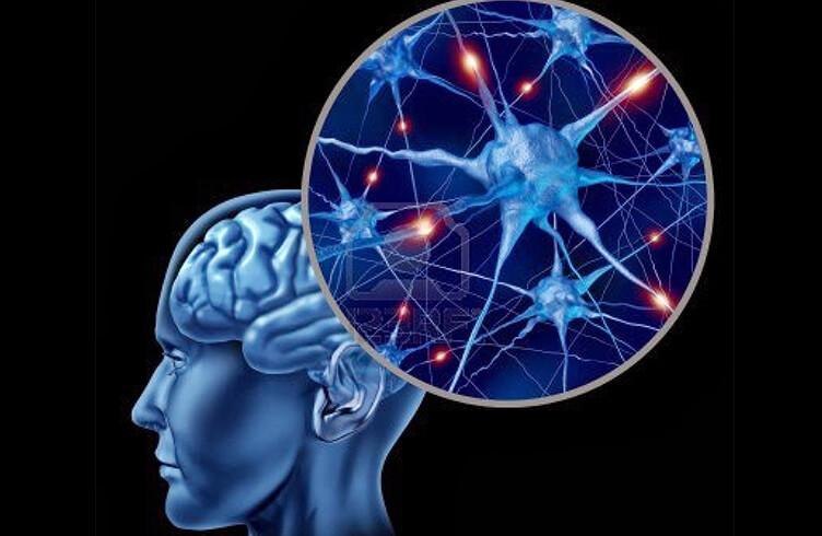 Cómo el gluten puede afectar nuestro cerebro