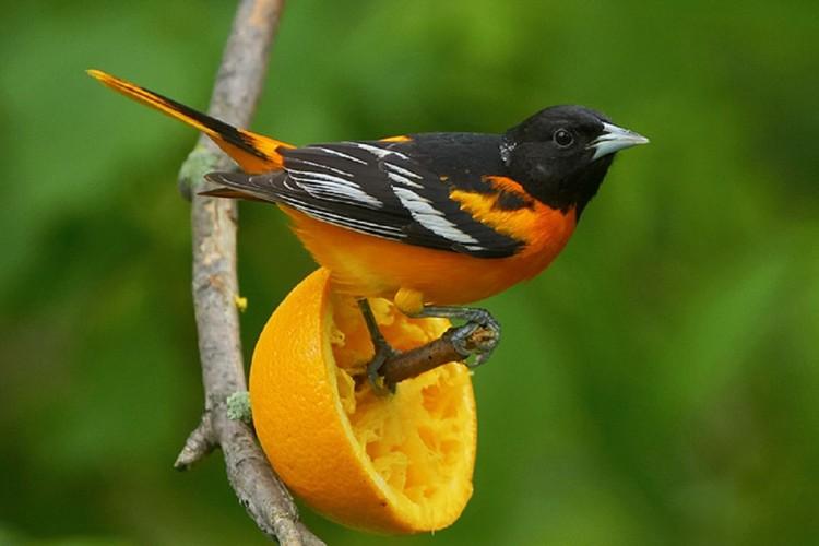 alimentar aves